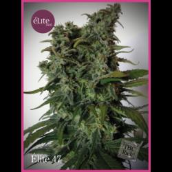 ELITE 47 (3)