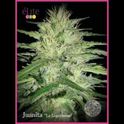 """JUANITA """"LA LAGRIMOSA"""" (3) CBD"""