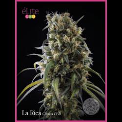 LA RICA (7) CBD