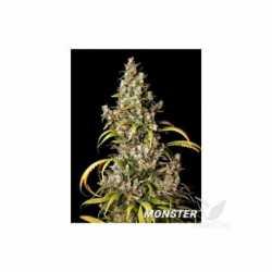 MONSTER (9)