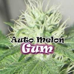 AUTO MELON GUM (8)