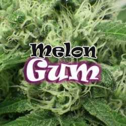 MELON GUM (25)
