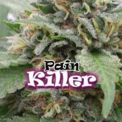 PAINKILLER (2)