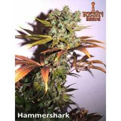 HAMMERSHARK (10)