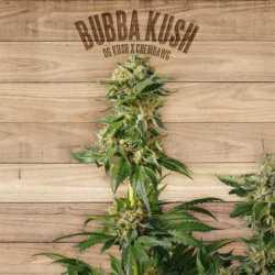 BUBBA KUSH (5)