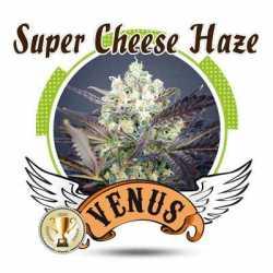 SUPER CHEESE HAZE (5)