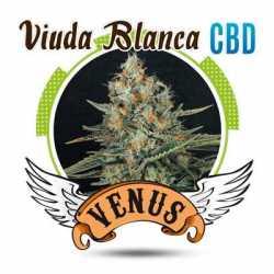 VIUDA BLANCA CBD (10)