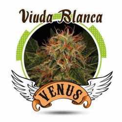VIUDA BLANCA (3)
