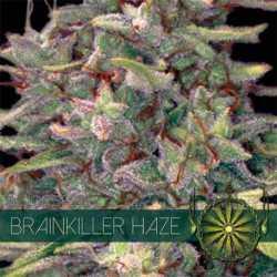 BRAINKILLER HAZE (10)