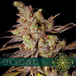 CHOCOLOCO BUD (10)
