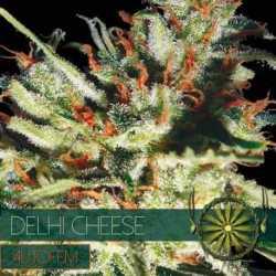 DELHI CHEESE (5) AUTO
