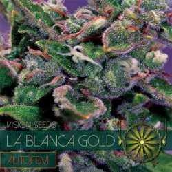 LA BLANCA GOLD AUTO (5)