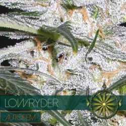 LOWRYDER (5) AUTO