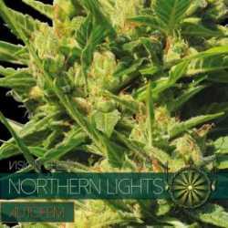N.LIGHTS (5) AUTO