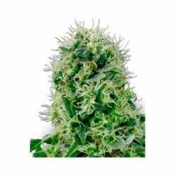 PURE POWER PLANT (5)