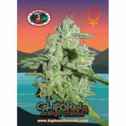 CALI ORANGE CHEESE (5)