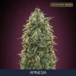 AMNESIA (10)