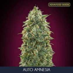 AUTO AMNESIA (10)