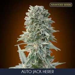 AUTO JACK HERER (10)