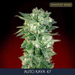 AUTO KAYA 47 (10)