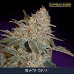 BLACK DIESEL (10)