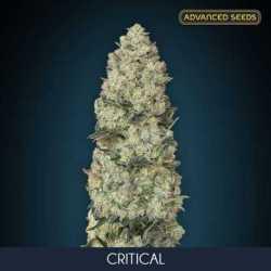 CRITICAL (5)