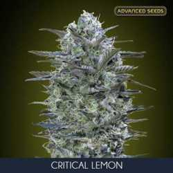 CRITICAL LEMON (5)