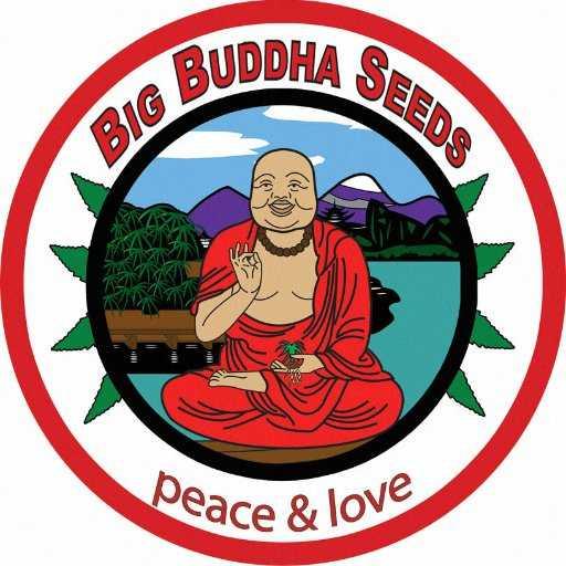BIG BUDDHA SEEDS AUTO | www.merkagrow.com