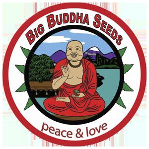 BIG BUDDHA SEEDS | www.merkagrow.com