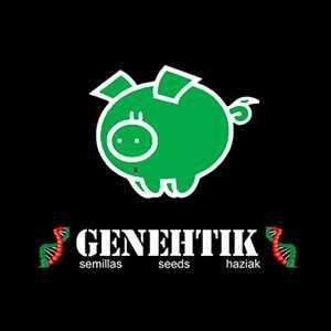 GENEHTIK SEEDS HAZIAK | www.merkagrow.com